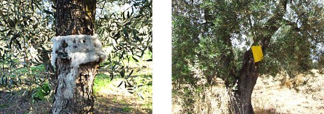 オリーブの害虫駆除方法