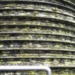オリーブの伝統的圧搾法 泡のように見えるのがオリーブオイル