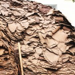 オリーブの搾りかす(サンサ)ドーナツ型のマットの形に広げられていたオリーブのペーストです。オリーブオイルの精製工場へ売られます