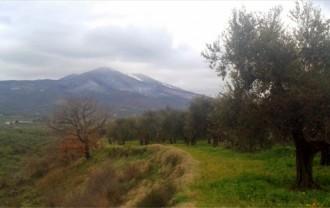 モンテヴルトゥレ休火山とオリーブ畑