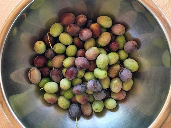 フラントイオ_2016収穫