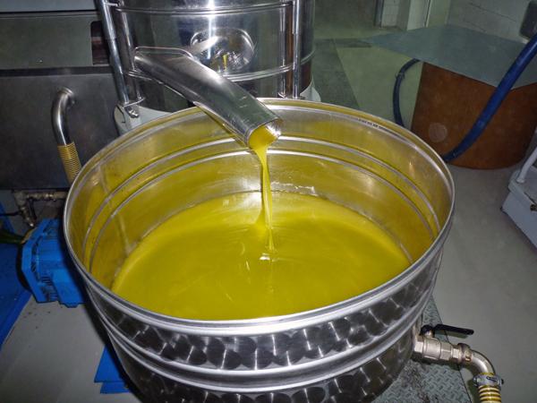 オリーブの搾油