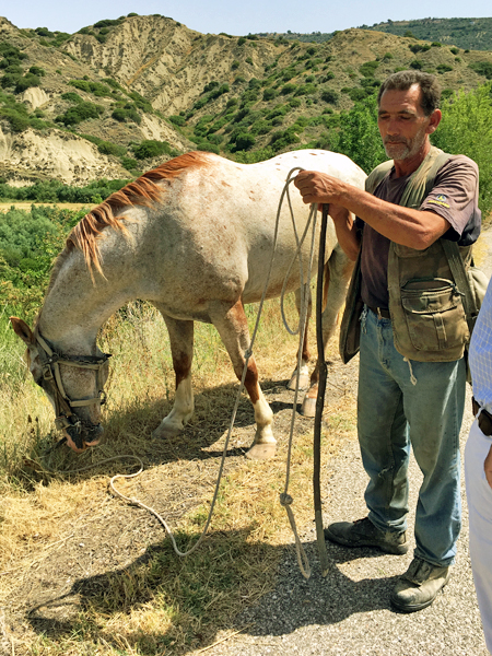 羊飼いと馬